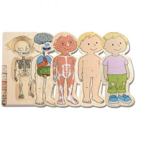 Pozzle stratificat Corpul uman - jucării de lemn - jucării din lemn pentru copii -