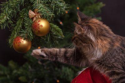 Brazi în ghiveci de Crăciun pisica se joacă cu globurile