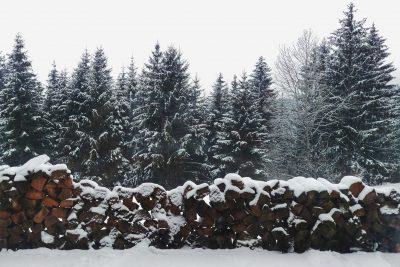 Brazi în ghiveci de Crăciun pădure de brazi