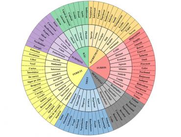 Iată cât este de ușor să-i înveți pe copii despre emoții 3