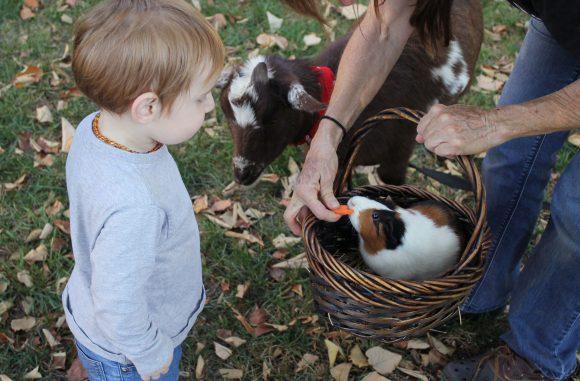 10 beneficii ale creșterii unui copil alături de animale de companie 3